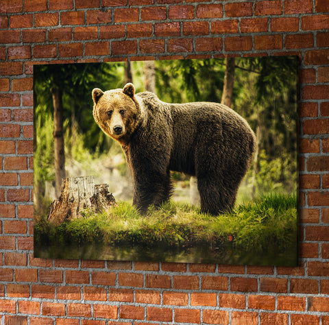 Big Brown Bear In Forest Framed Wall Art - Hunt Lab Technologies