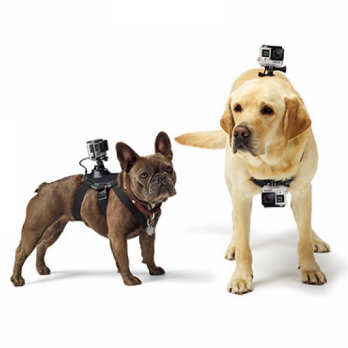 Harnais support Gopro pour chien