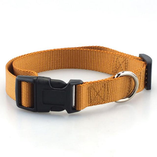 collier en nylon pour chien basic marron