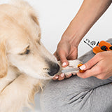 1. Position your pet comfortably, pet him, and hold pets paw securely while trimming the nails.