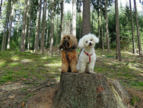 Two dogs friends