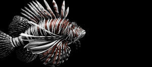 Lion Fish - Harbour Trading