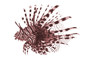 Lion Fish - Just Fish