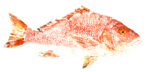 Wild American Red Snapper - Harbour Trading