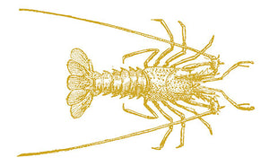 Copy of Florida Spiny Lobsters - Fresh Fish