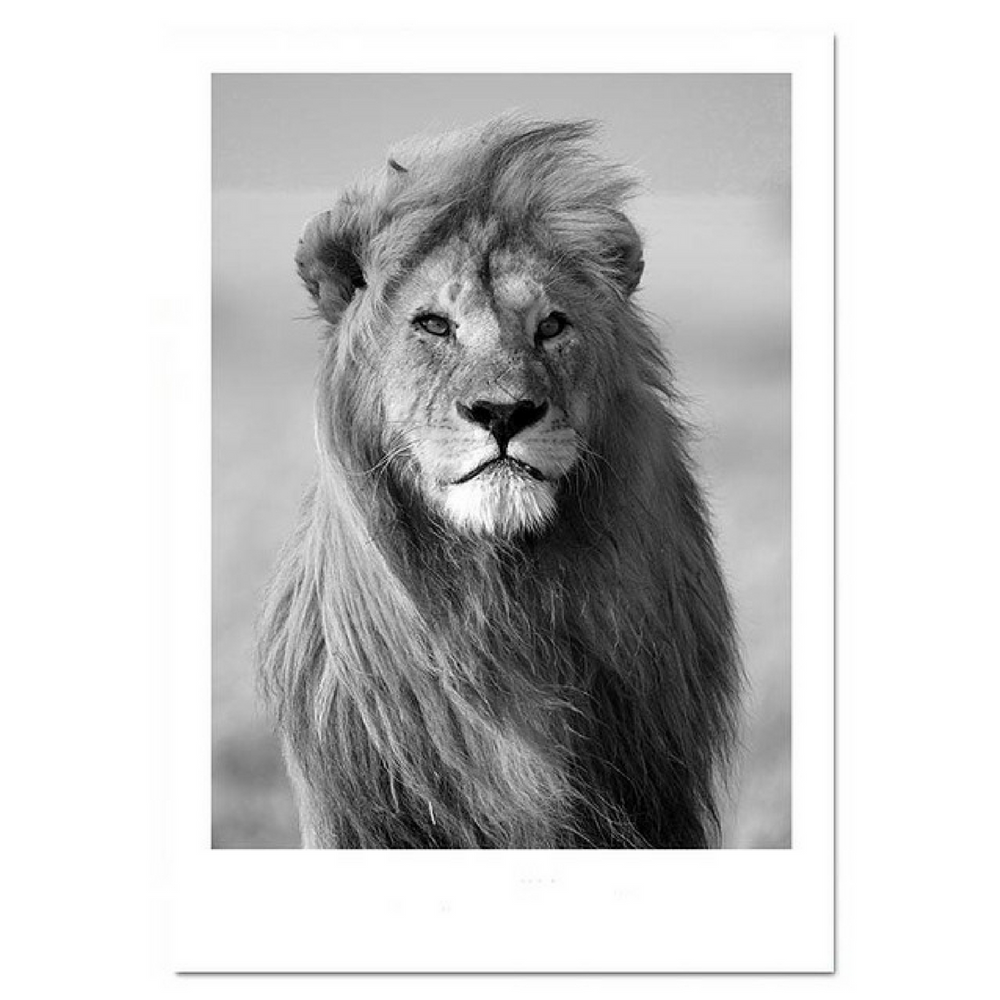 d coration poster toile lion noir blanc trendisy. Black Bedroom Furniture Sets. Home Design Ideas