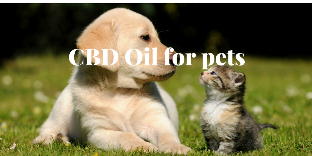 A Pet-Owner's Guide to CBD for Dogs and Cats