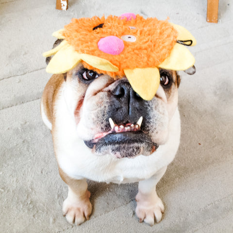 Picture of my dog wearing a hat