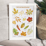Fall Leaf Identification Poster