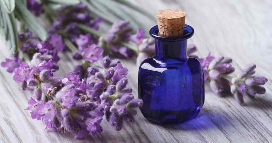 The 7 Benefits of Lavender Essential Oil You Need to Know About