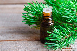 6 Health Benefits of Pine Essential Oil