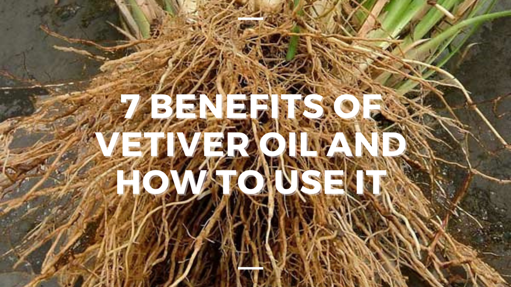 image of vetiver roots with title overlay
