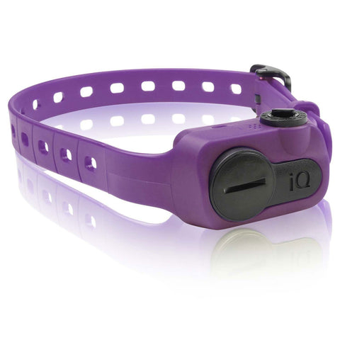 Dogtra IQ-BARK-PUR iQ No Bark Collar Purple - WarehouseSpot