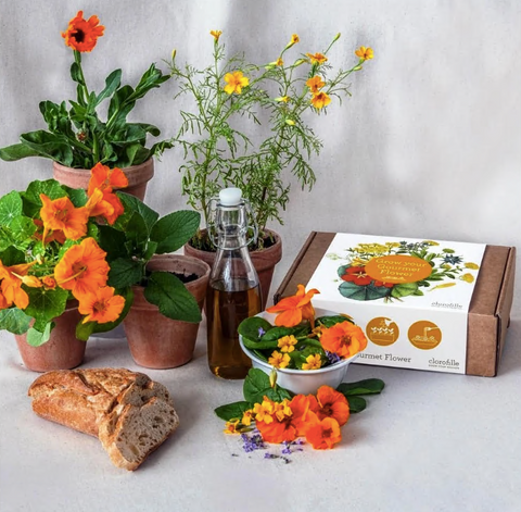 Grow Your Own Flowers - Kit
