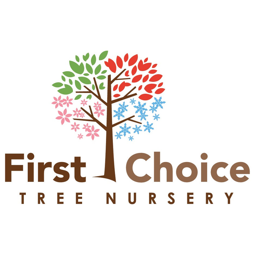 First Choice Tree Nursery