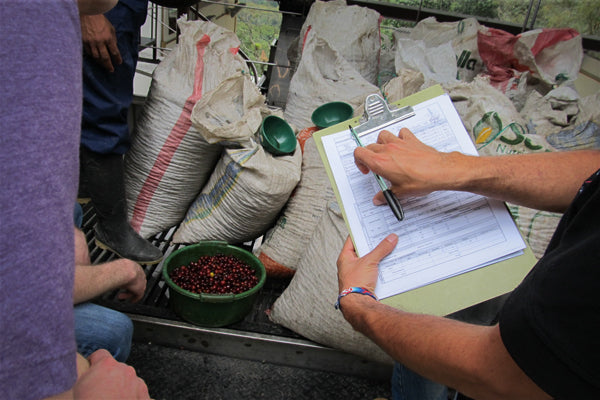Coffee being evaluated for quality and ripeness at La Palma y El Tucan