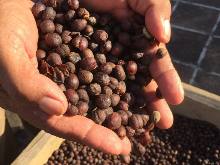 Natural or Dry Process coffee beans