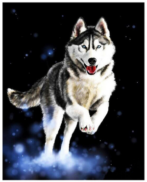 "Husky Dog DIY Painting By Numbers (16""x20"" / 40x50cm)"