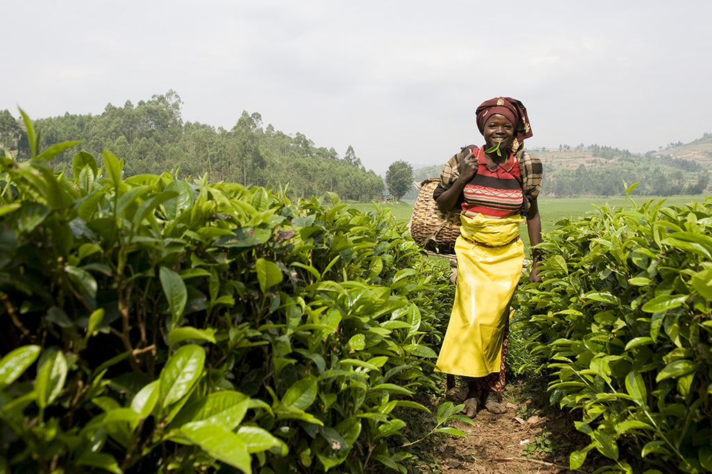 Watch: How our Rwandan tea is changing lives