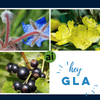 3 Powerful GLA Oils to Include in your Skincare Formulations