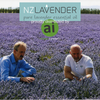 New Zealand Lavender - Lavandula angustifolia