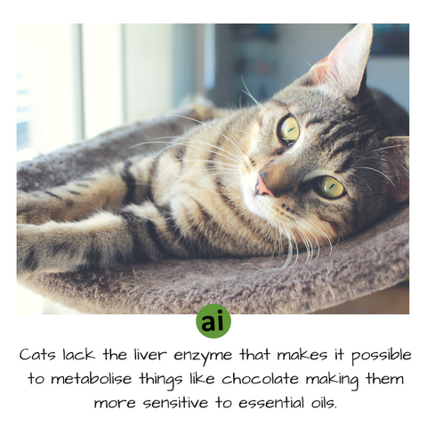 Cats actually lack the enzyme in their liver that makes it possible to metabolise things like chocolate, caffeine, and pesticides. Without this enzyme, cats are more sensitive to essential oils than dogs.