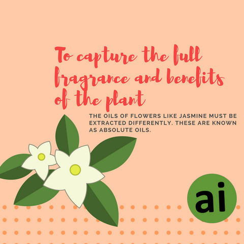 In order to capture the full fragrance and benefits of the plant, the oils of these flowers must be extracted differently. These are known as absolute oils.