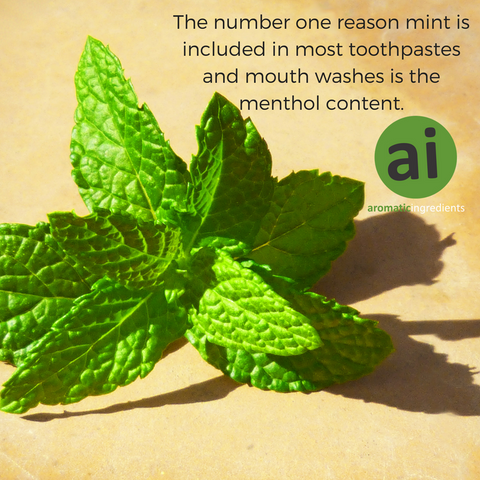 The number one reason mint is included in most toothpastes and mouth washes is the menthol content.