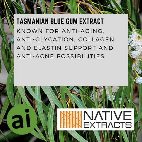 TASMANIAN BLUE GUM EXTRACT - Aromatic Ingredients