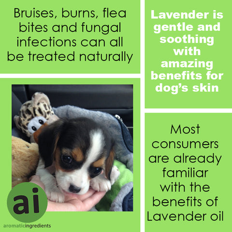 Lavender is one of the gentlest essential oil's for pets - Aromatic Ingredients