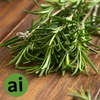 Rosemary Oleoresin 8% - Aromatic Ingredients