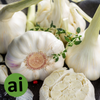 Garlic Oleoresin 10% - Aromatic Ingredients