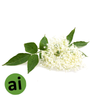 Aniseed Myrtle Essential Oil - Aromatic Ingredients