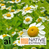 Chamomile Extract - Aromatic Ingredients