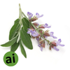 Clary Sage Essential Oil - Aromatic Ingredients