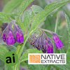 Comfrey Leaf Extract - Aromatic Ingredients