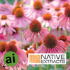 Echinacea Extract - Aromatic Ingredients
