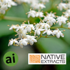 Elderflower Extract - Aromatic Ingredients