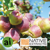 Emu Apple Extract - Aromatic Ingredients