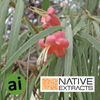 Emu Bush Extract - Aromatic Ingredients
