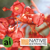 Flame Tree Extract - Aromatic Ingredients