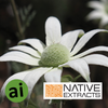 Flannel Flower Extract - Aromatic Ingredients