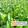 Green Tea Leaf Extract - Aromatic Ingredients