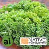 Kale Leaf Extract - Aromatic Ingredients