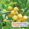 Lemon Aspen Extract - Aromatic Ingredients