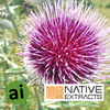 Milk Thistle Extract - Aromatic Ingredients