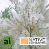 Native Snowflower Mint Extract - Aromatic Ingredients
