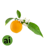 Neroli Essential Oil - Aromatic Ingredients