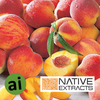 Peach Fruit Extract - Aromatic Ingredients