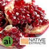 Pomegranate Extract - Aromatic Ingredients